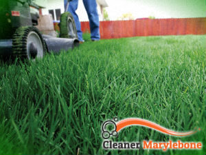 grass-cutting-services-marylebone